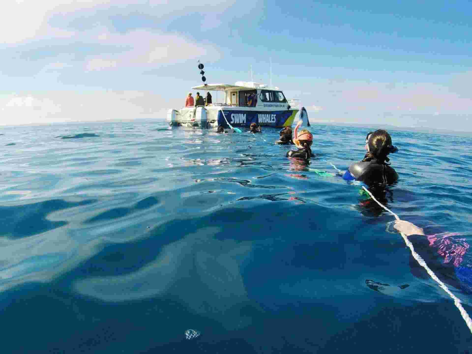Hervey Bay Dive Centre