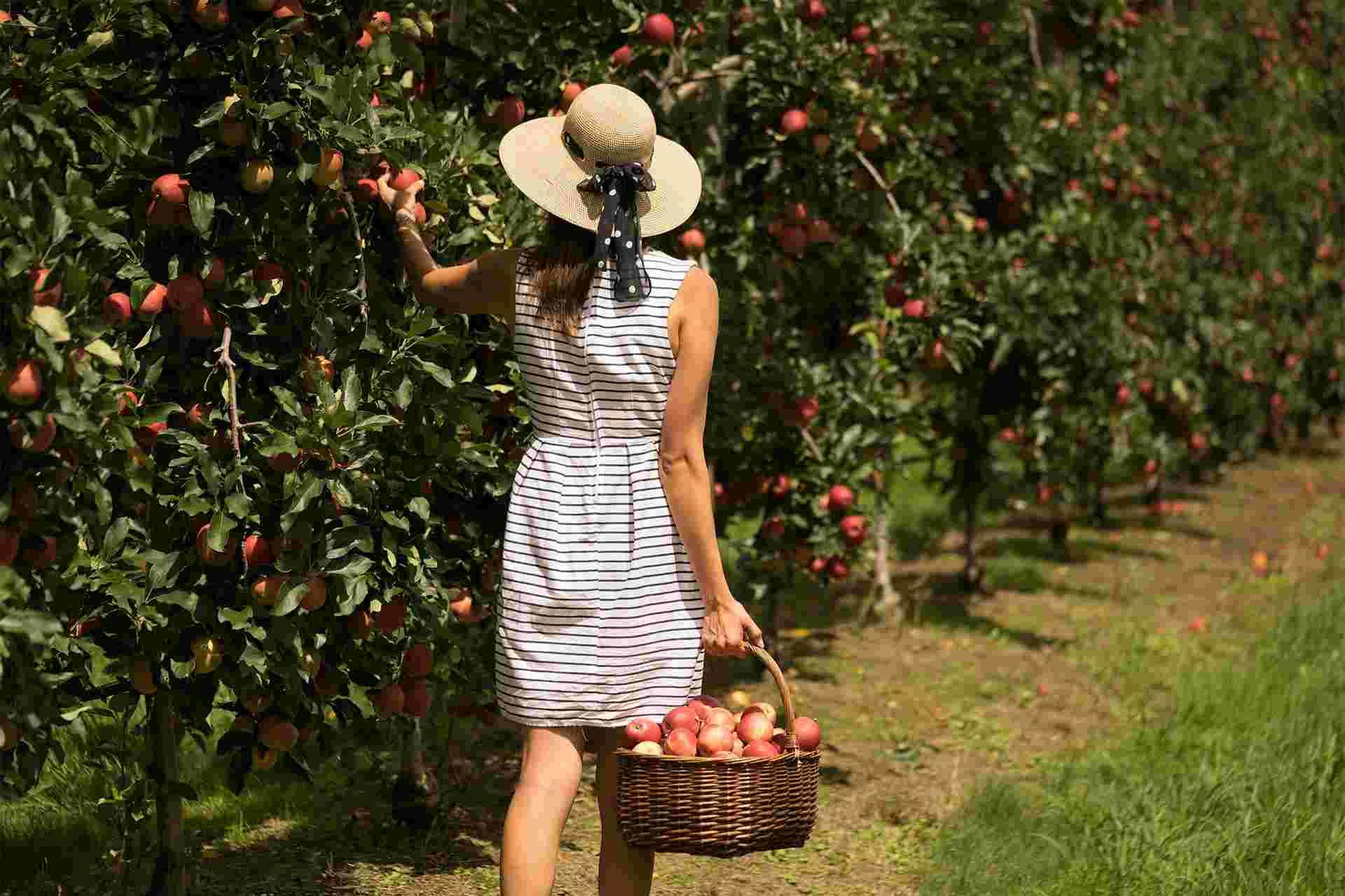 Appleshack at Glenbernie Orchard