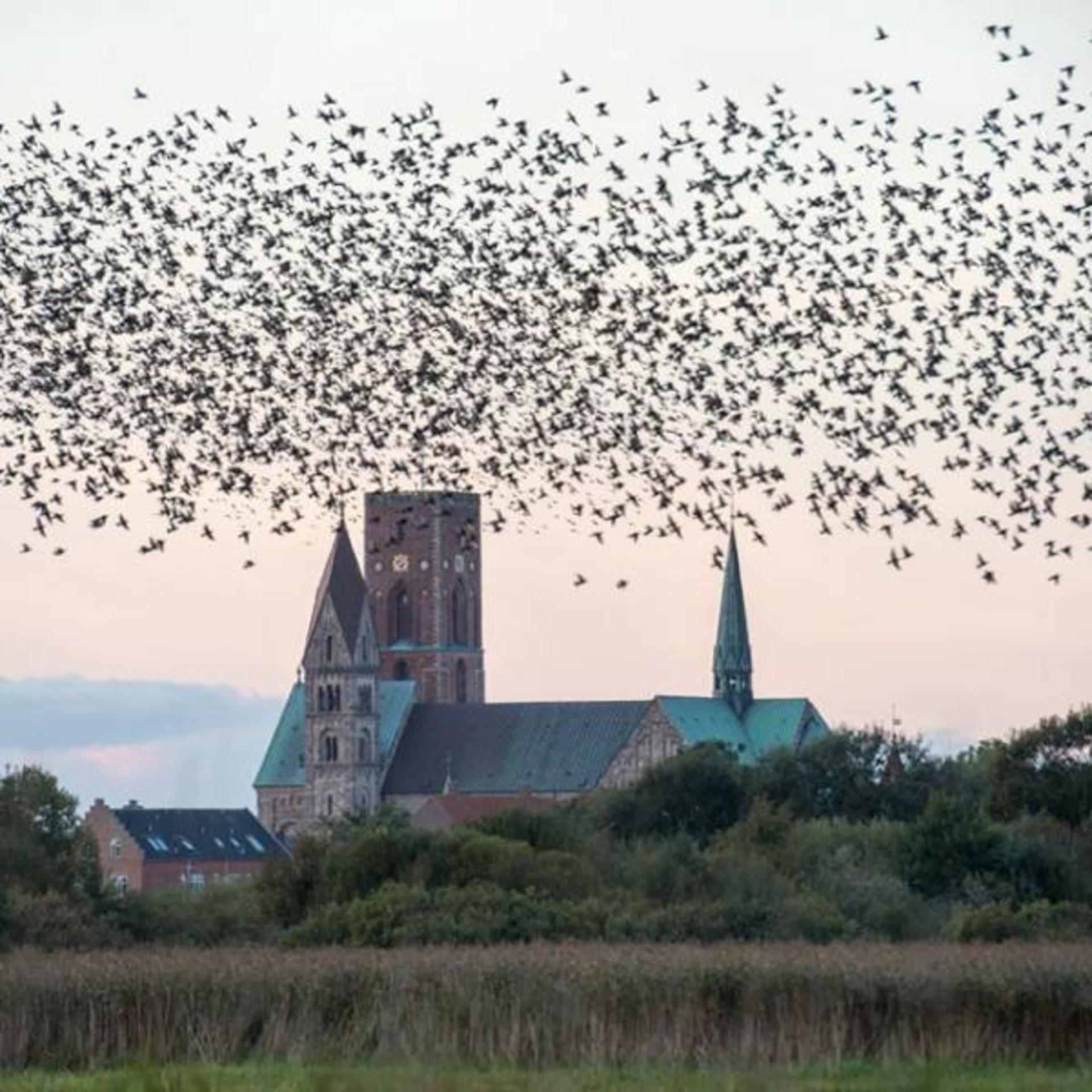 12 unique things to do in South Jutland and the West Coast Thumbnail