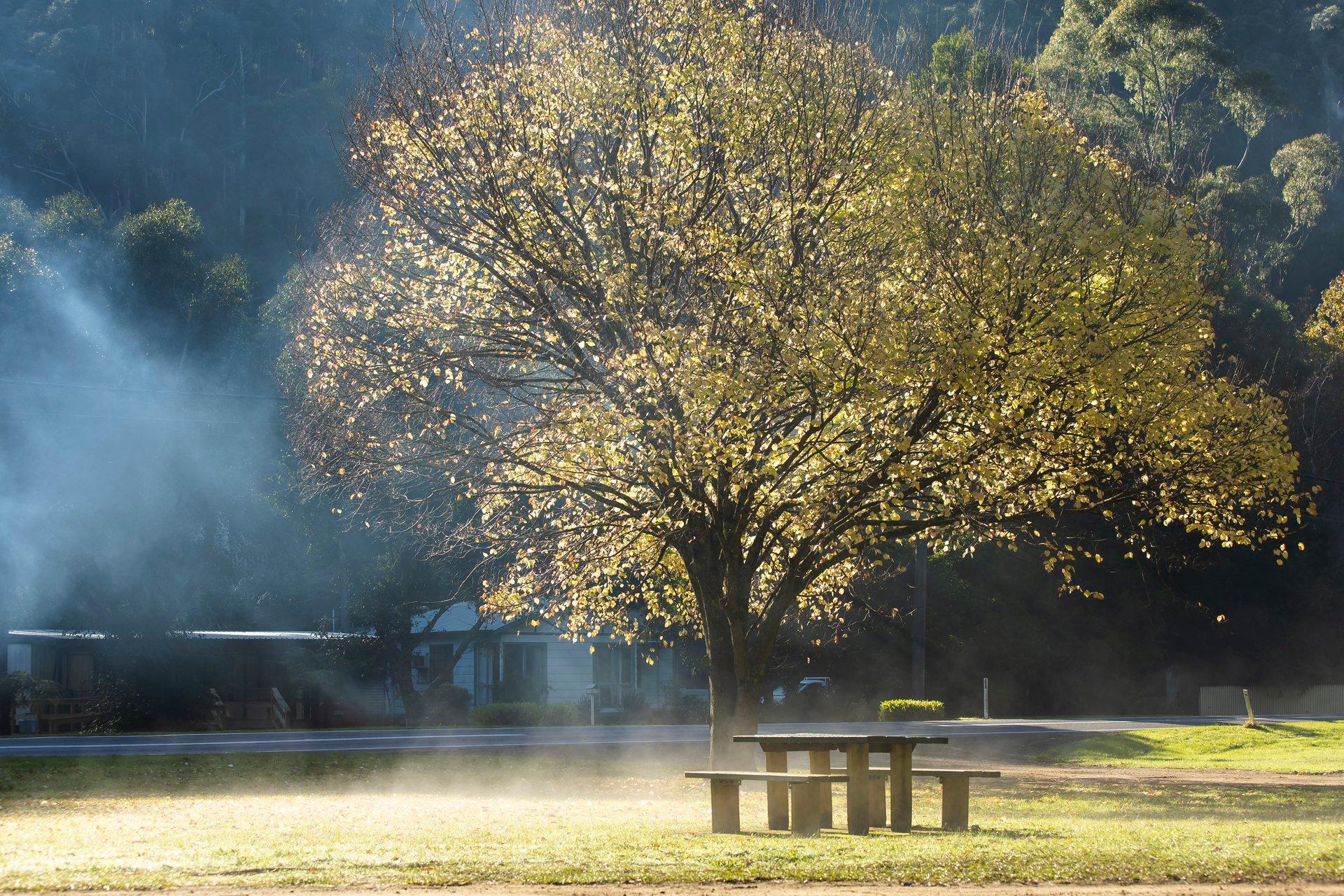 5 điểm ngắm lá mùa thu đẹp nhất Victoria Thumbnail