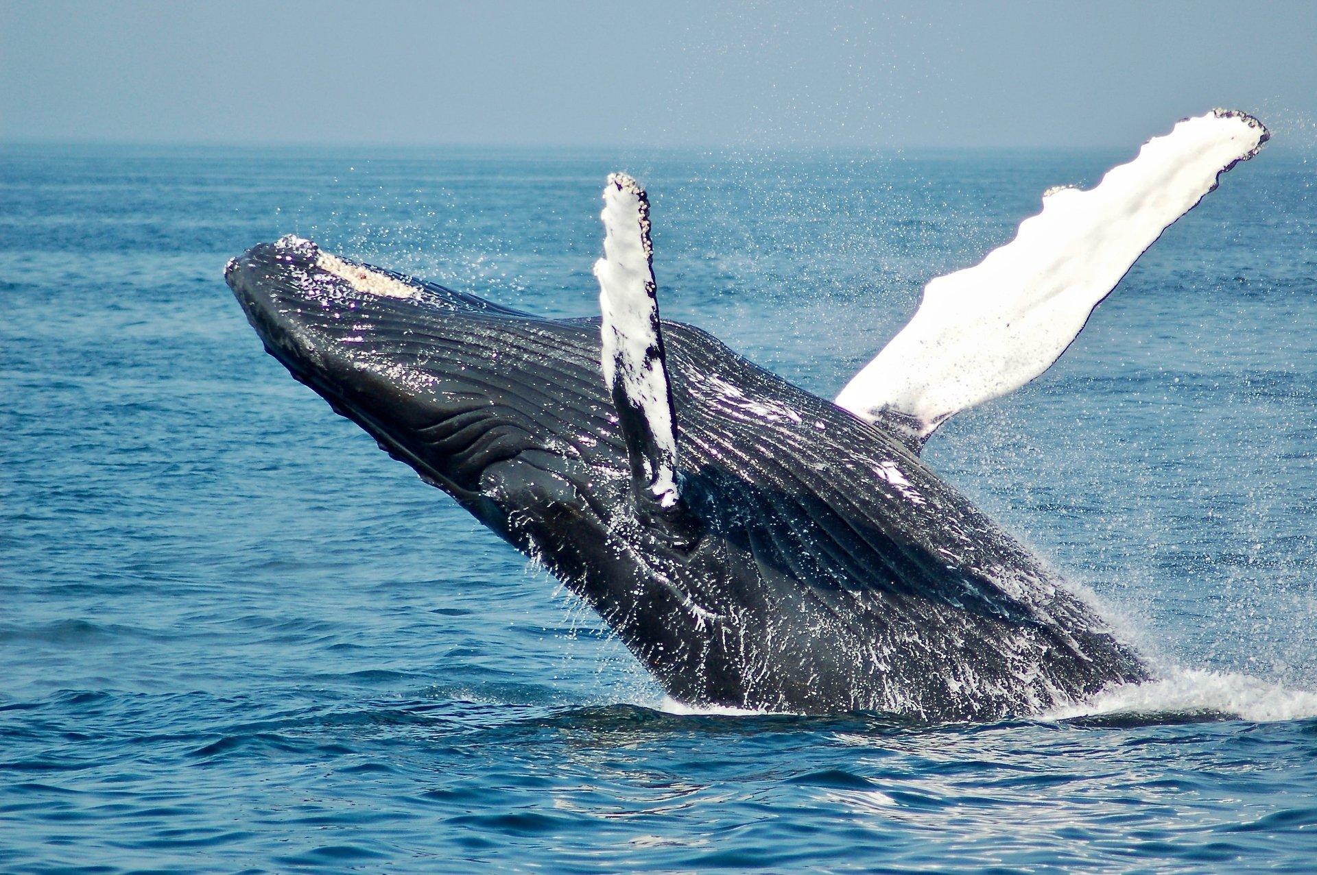 NSW Whale-watching hotspots Thumbnail